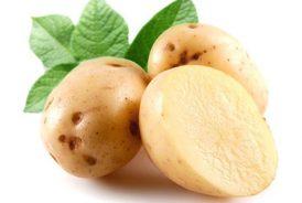 cartofi-albi-159