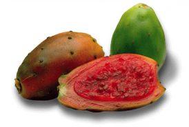 fructdecactus