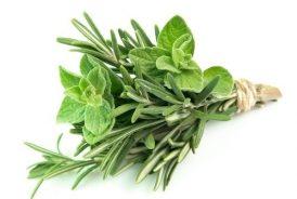 Plante aromate / Aromatic plants